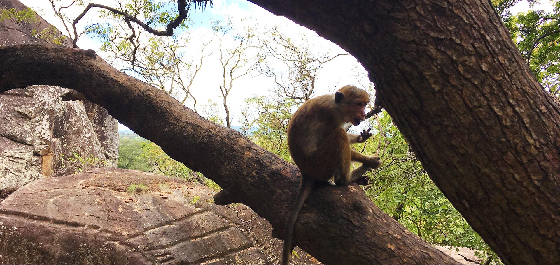 Sri Lanka Adventure (małpka) - wyjazd nagrodowy
