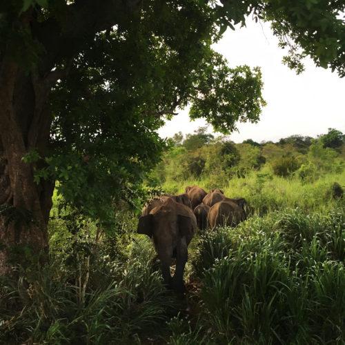 Sri Lanka Adventure (słonie) - wyjazd nagrodowy